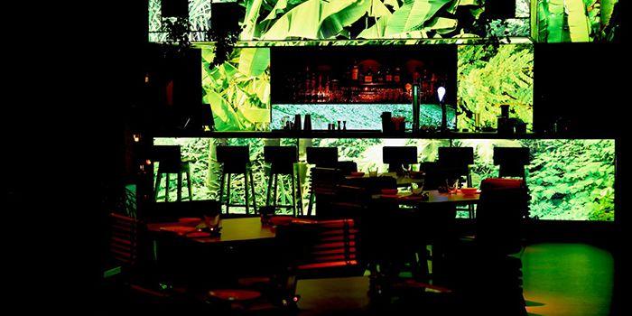 Bar of T for Thai in Xuhui, Shanghai