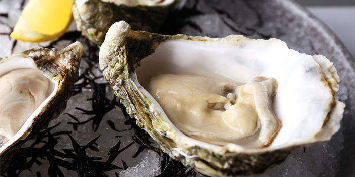 Live Irish Oysters from NUDE Seafood in Marina Bay Financial Centre in Raffles Place, Singapore
