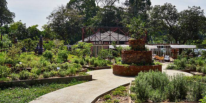 Herb Garden of Open Farm Community in Dempsey, Singapore