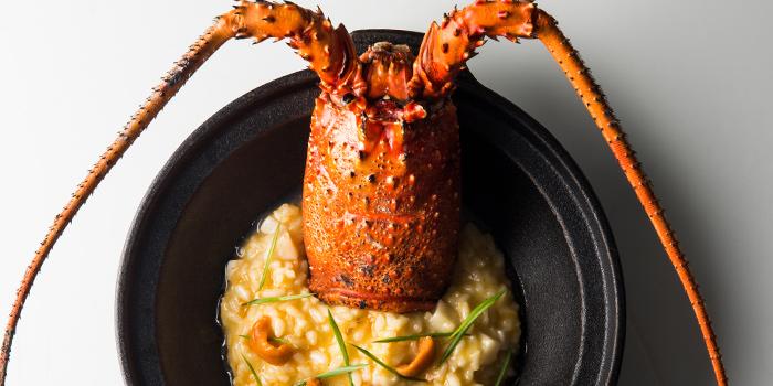 Ise-Ebi Spiny Lobster from Esenzi in Iniala Beach House Baan Natai, Khok kloi, Takuathung, Phangnga, Thailand
