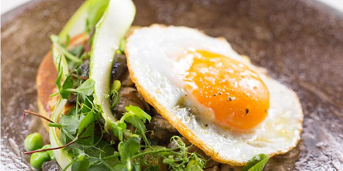Potato pancake, fried duck egg, field mushroom ragout