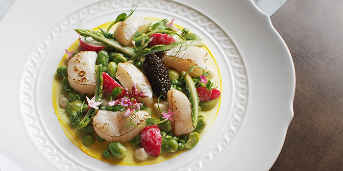 Scallops Crudo from Aura at National Gallery Singapore in City Hall, Singapore