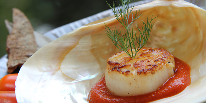 Scallop Kalimirch from Indus Contemporary Indian Dining in Upper Sukhumvit, Bangkok