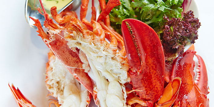 Steamed Lobster from Pince & Pints Restaurant and Bar (Katong) in East Coast, Singapore